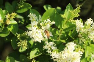 Productos apícolas como el propóleo nos ayudan contra el dolor de garganta